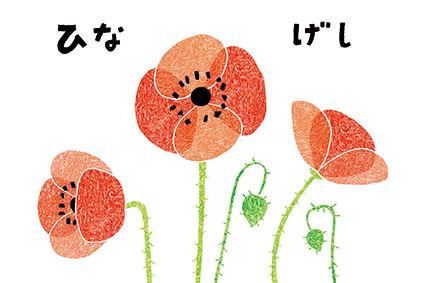 ひなげしR.jpg